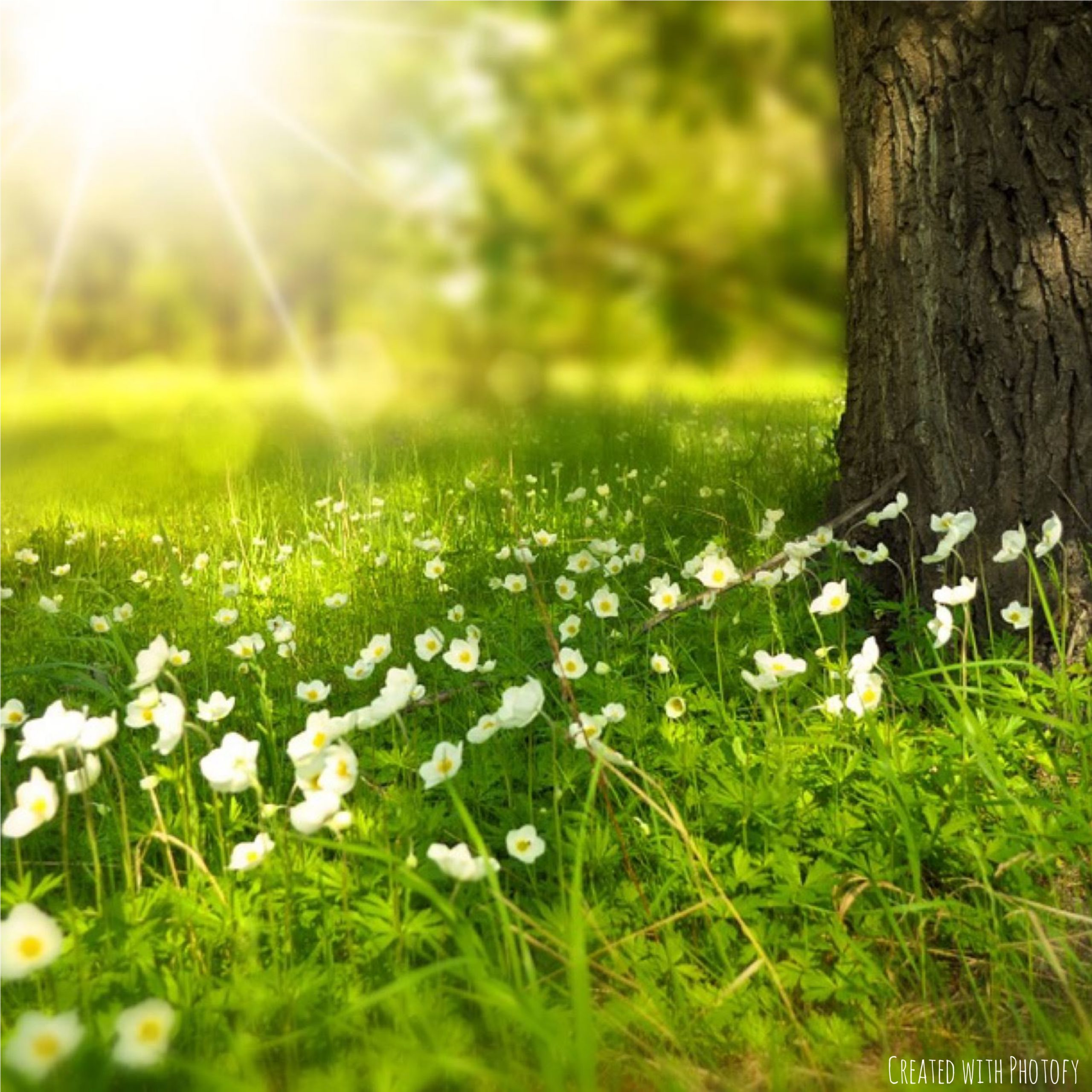 Photo of tree trunk with spring flowers growing in the grass and the sun filtering through the trees in the background.